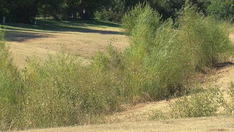 Mountain lion sightings in Lawton are on the rise.