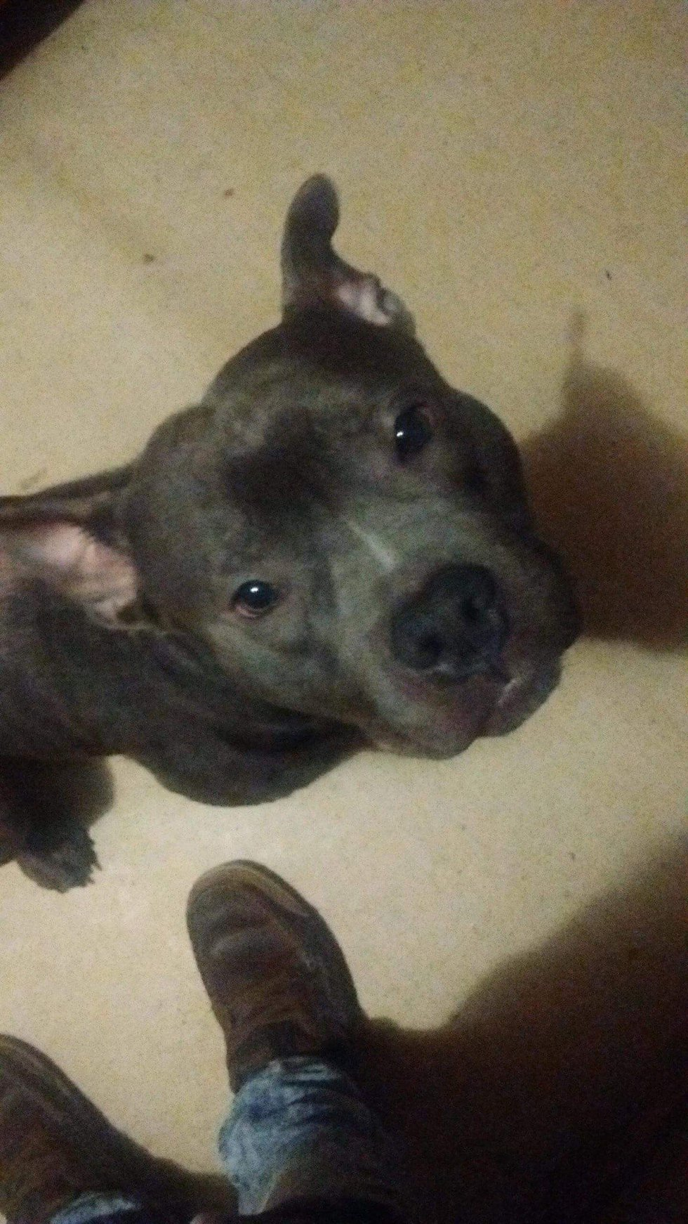 The dog which attacked Rylee, Remington, was killed at the home by Duncan Police after they...