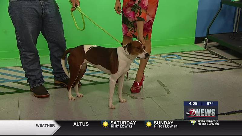 Russell Anderson with Lawton Animal Welfare stopped by 7News Friday to introduce us to Lacey.