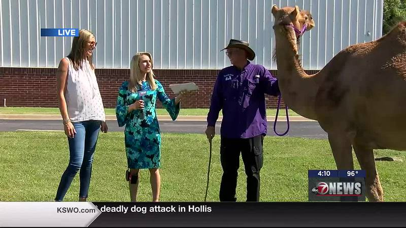 Fully Loaded Women's Organization brings Magi the camel to discuss this weekend's Zumba event.